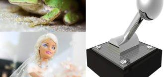 蛙・嫁・レバー